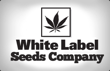White Label Feminized