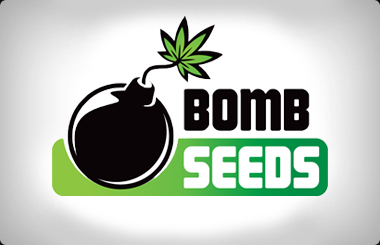Bomb Seeds Regular