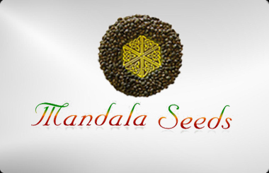 Mandala Seeds Feminized