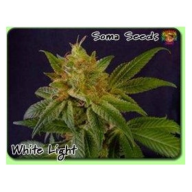 G13 Haze x White Light thumbnail