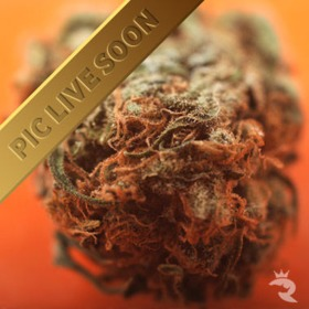 Indica Selection Pack thumbnail