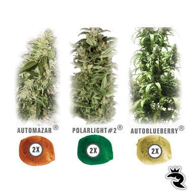Colour Mix 6 Autoflowering