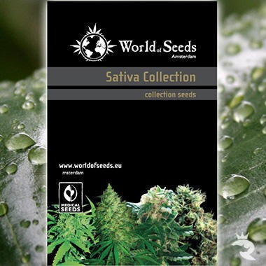World of Seeds Sativa Collection