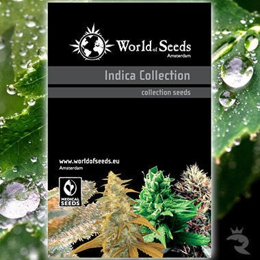 World of Seeds Indica Collection