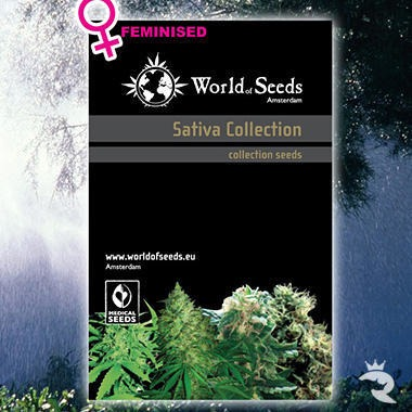 World of Seeds Landrace Sativa Collection