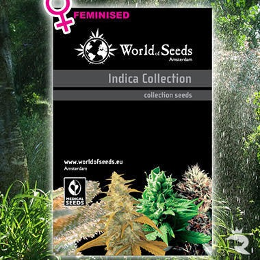 World of Seeds Landrace Indica Collection