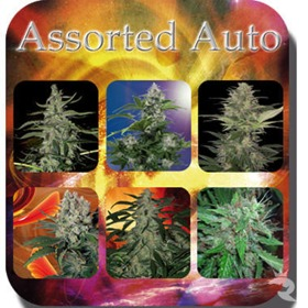Buddha Seeds Assorted Auto Mix Pack