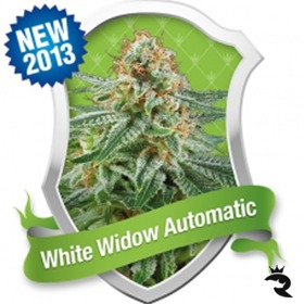 White Widow Automatic thumbnail