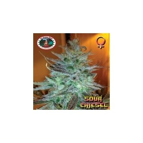 Sour Chiesel thumbnail