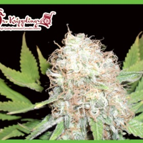 how to buy cannabis seeds in the uk