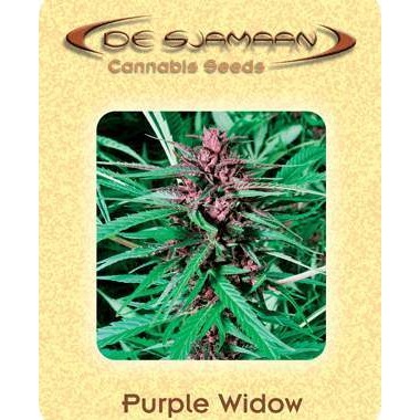 Purple Widow