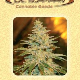 White Widow thumbnail