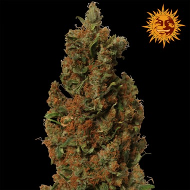 Red Diesel Feminized